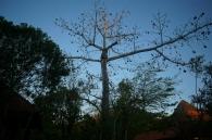 Дерево в Мексике
