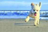 В Испании открылся пляж для собак