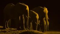 В Ботсване можно понаблюдать за слонами на водопое