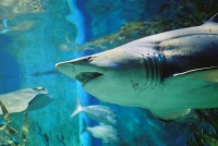 В Доминикане открыли новый океанариум
