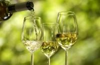 В Вене начался фестиваль вина
