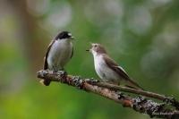 Испания предлагает посетить орнитологические маршруты