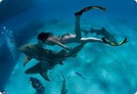 Гости Сочи смогут поплавать с акулами