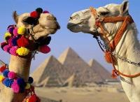Ситуация в Египте нормализовалась