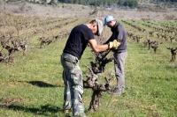 На Ибице пройдет бесплатная винная экскурсия