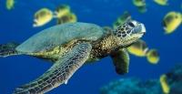 Изучить фауну океана можно благодаря туристическому маршруту в Перу