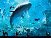 Самые большие океанариумы