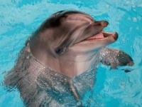 Дельфин пошел!