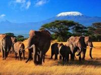 Туристы снова едут в Кению