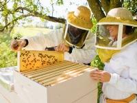Пчеловоды Алтайского края предлагают здоровый сон с пчелами