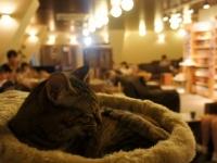 Кошачий бар появится в Париже