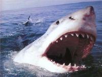 Туристка, лишившаяся руки после атаки акулы, скончалась в больнице США