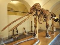 Новый палеонтологический музей откроется в Болгарии