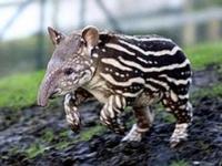 Зоопарк экзотических животных откроется в Санкт-Петербурге