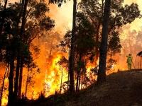 Пожары Австралии добрались до Сиднея