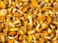 В Испании и Португалии начался праздник грибных закусок