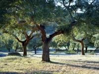 Испания познакомит туристов с пробковыми лесами