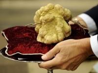 Ценителей грибов трюфелей ждут в Хорватии