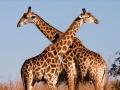 25 фактов об Африке