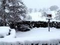 В Австралии пошел снег