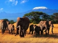 Кения становится все более популярной